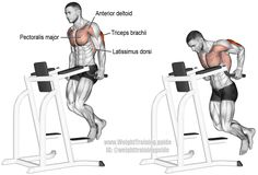 """Triceps dip. A compound exercise. Target muscle: Triceps Brachii. Synergists: Anterior Deltoid, Pectoralis Major, Latissimus Dorsi, Pectoralis Minor, Rhomboids, and Levator Scapulae. Visit site and read the """"Comments and tips"""" to learn how this exercise differs from the chest dip, which is very similar."""