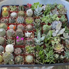 THIRTY SIX (36) Succulent & Cactus Collection Awesome for Party or Wedding…