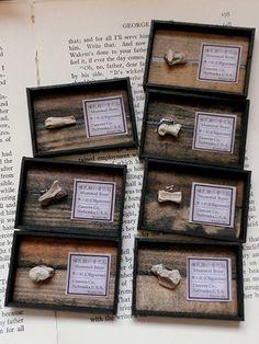 天氣後報-ミニチュア化石標本箱/きらら舎