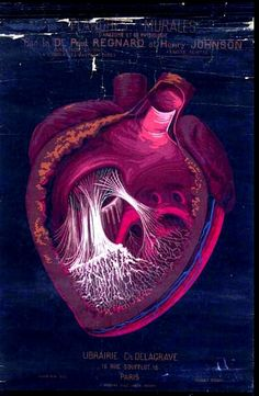 Heart, French anatomical illustration with a black background