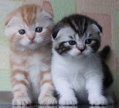 See the cool cats http://ift.tt/2op0H6g