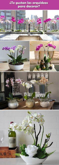 Decoración con orquídeas. Interiores con orquídeas. Plantas de interior. Decoración de interiores con plantas. #Plantasdeinterior