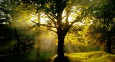 Rayons du couchant percant les feuilles d'un arbre