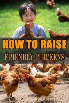 Tips On How To Raise Friendly Chickens! You will be surprised with Number After doing some research and some discussions we are now ready to give a few tips on how to raise friendly chickens. Types Of Chickens, Raising Backyard Chickens, Backyard Chicken Coops, Keeping Chickens, Pet Chickens, How To Raise Chickens, Chicken Garden, Urban Chickens, Breeds Of Chickens