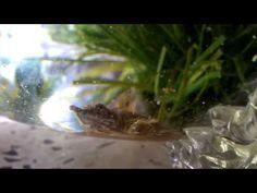 aquarium for all fish blogspot: Orange Turtle in the tank