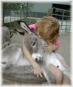 'I love you! #donkeys  Visit our page here: http://what-do-animals-eat.com/donkeys/ http://www.cleavercats.com/shop/