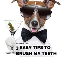 3 Easy Steps to Brushing Your Dogs Teeth to Keep Your Pet's Mouth Healthy & Fresh Smelling