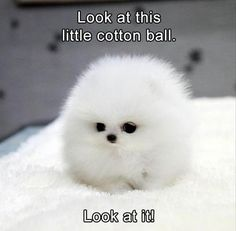Daily Dose Of Funny Dogs Humor, Quotes and Memes From BestIndestructibleDogToys.com #dogsfunnyhumor