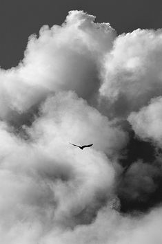 Fly like a bird... you may have lost shine on your feather but you haven't forgotten to fly
