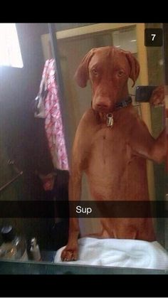 The first ever dog selfie: | The 35 Most Powerful Snapchats Of 2013