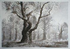 pięknie malowane drzewa. różne akwarele
