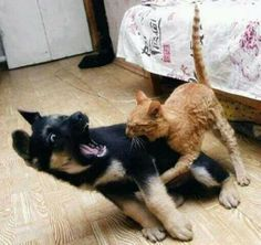 Cat biting dog. It gets funnier the longer you look at it!!