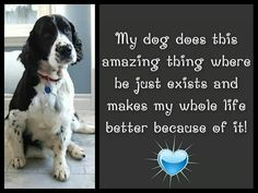 Springer Spaniel - Just existing is enough Springer Dog, Springer Spaniel Puppies, English Springer Spaniel, I Love Dogs, Puppy Love, Pet Loss Grief, Dog Yard, Dog Stories, Dog Quotes