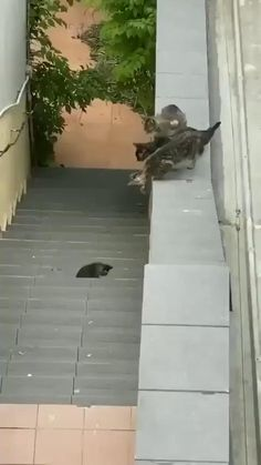 Momma making an attempt her greatest – astonishing gifs , relatable gif , hilarious , gif hilarious gif Cute Little Animals, Cute Funny Animals, Funny Cats, Cute Cats And Kittens, Baby Cats, Pet Cats, Kittens Cutest, Cute Animal Videos, Funny Animal Pictures