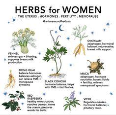 Healing Herbs, Medicinal Plants, Natural Healing, Magic Herbs, Herbal Magic, Natural Medicine, Herbal Medicine, Herbal Remedies, Natural Remedies