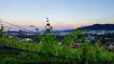 Wein Stadt & Himmel. #zurich