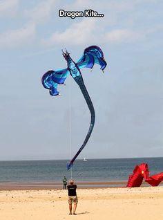 A Majestic Kite