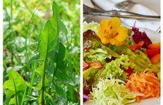 SALATĂ de PĂPĂDIE și MORCOV - curăță SÂNGELE de grăsimi și toxine Taraxacum Officinale, Stuffed Peppers, Vegan, Vegetables, Hair, Food, Impressionism, Salads, Stuffed Pepper