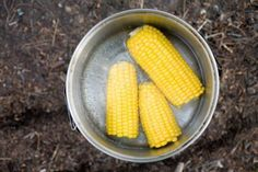 Frozen corn on the cob will last four to six months and help preserve the sweet taste this summer vegetable has right when it is picked from the stalk. Frozen Corn On The Cob Recipe, Canning Corn, Canning Recipes, Pickled Corn, Boiled Vegetables, Veggies, How To Cook Corn, How To Steam Corn, Boiled Corn