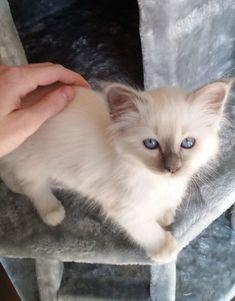 Our little Mizu when we just got her 2 years ago :3 https://ift.tt/2HqN8AO cute puppies cats animals