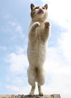 瀬戸内の海岸で猫が飛ぶ! 塩飽諸島の佐柳島