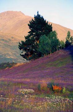 Wanaka Countryside, Otago, New Zealand