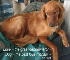 My Love Monitor