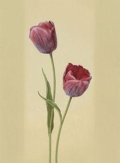 "<span class=""title"">Red Tulips, 2014 (Tulipa cv.)</span>"