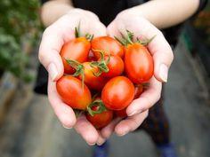 Odla i pallkrage – här är allt du måste veta | Leva & bo Vegetables, Garden, Tips, Food, Garten, Lawn And Garden, Essen, Vegetable Recipes, Gardens