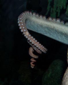 The tentacle is so damn aesthetically pleasing.