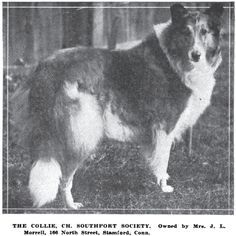 Vintage Collie photo.  Ch. Southport Society.
