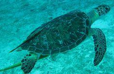 virgin islands fish images | Virgin Islands Fish