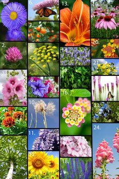 A few dozen flowers that work wonderfully in the butterfly garden. A few dozen flowers that work Beautiful Butterflies, Beautiful Flowers, Bonsai, Butterfly Plants, Butterfly Bush, Hummingbird Garden, Idee Diy, Garden Pictures, My Secret Garden