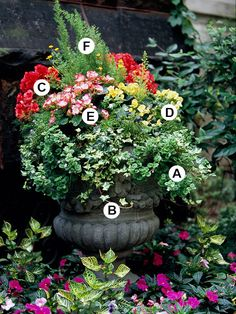 An urn with more than petunias and geraniums!!  A. Bacopa (Sutera 'Snowstorm') -- 1  B. Ivy (Hedera helix 'Ceridwen') -- 1  C. Tuberous begonia (Begonia 'Nonstop Bright Rose') -- 1  D. Tuberous begonia (Begonia 'Nonstop Yellow') -- 2  E. Tuberous begonia (Begonia 'Go-Go Red') -- 3  F. Asparagus fern (Asparagus densiflorus 'Myersii'