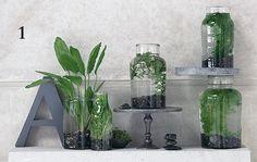 1000 ideas about wasserpflanzen on pinterest teich. Black Bedroom Furniture Sets. Home Design Ideas