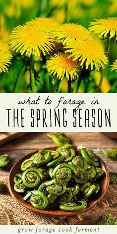 Spring is a great time for foraging! Learn what to forage in spring with this list of 20 edible and medicinal plants and fungi. Spring foraging is fun! #foraging #spring #wildcrafting