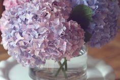 Hydrangeas #hydrangeas #flower