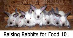 Raising meat rabbits is easy with Survivalist 101's complete beginner's guide, covering breed selection, feeding, housing, and butchering.