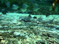 JAWsome sharks, cow-nosed rays and tropical fish in Shark Lagoon