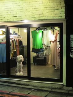 a store dog, shopping for passersby