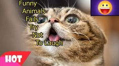 Funny Animals Fails 2   Try Not To Laugh Challenge   Compilation Vines