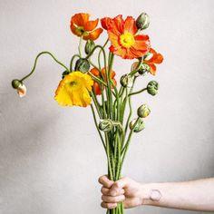 poznańskiej kwiaciarni KWIATY & MIUT