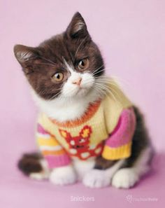 And keep them warm in their own cute sweaters! :)