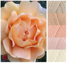 Plenty of color inspiration about. Yarn Color Combinations, Color Schemes Colour Palettes, Colour Pallette, Yarn Inspiration, Design Seeds, Yarn Colors, Peach Colors, Color Theory, Peach Rose
