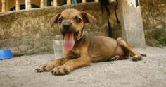 This Puppy Was Going To Die... Until He Was Found By 2 Big Hearted Tourists http://www.likazing.com/tourists-puppy/