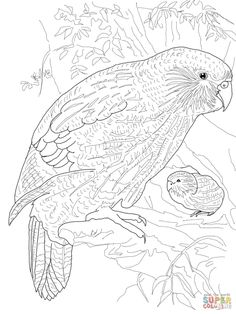 Kakapo Parrot realistic coloring pages for grown ups Puppy Coloring Pages, Coloring Pages For Grown Ups, Detailed Coloring Pages, Bird Coloring Pages, Online Coloring Pages, Colouring Pics, Free Printable Coloring Pages, Adult Coloring Pages, Coloring Books