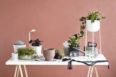Pihistä tai panosta: Näin päivität viherkasvit kevääseen