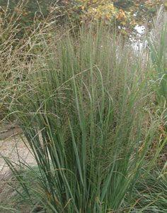 1000 images about garten gr ser on pinterest garten grasses and hakone. Black Bedroom Furniture Sets. Home Design Ideas