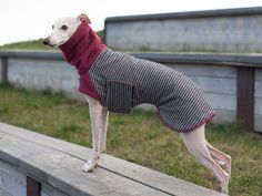 **** ABOUT **** This coat will fit all sighthound breeds. Its a cotton-wool mix with beautiful teal-cherry-greige stripes. The lining is made from lovely polar fleece, which is very comfortable to wear for your dog. Its easily put on and off with two velcro-fasterners on both sides of the chest. The turtle neck can be rolled back or pulled up to the ears. This coat is suitable for temperatures between 10°C/50°F and -5°C/23°C.  **** MATERIAL **** Outside: Wool-Cotton-Mix Lining and Turtle…