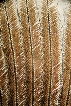 Wren feather 100x magnification
